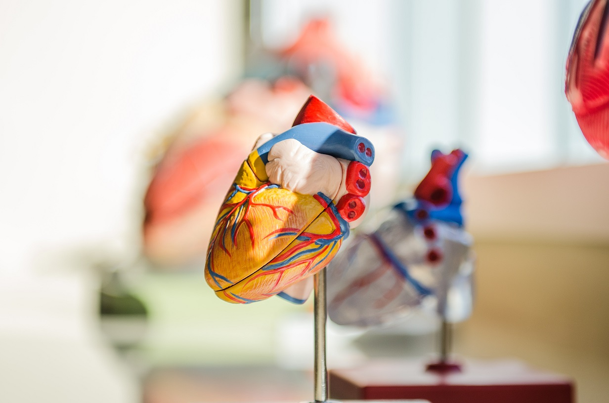 Plastic heart