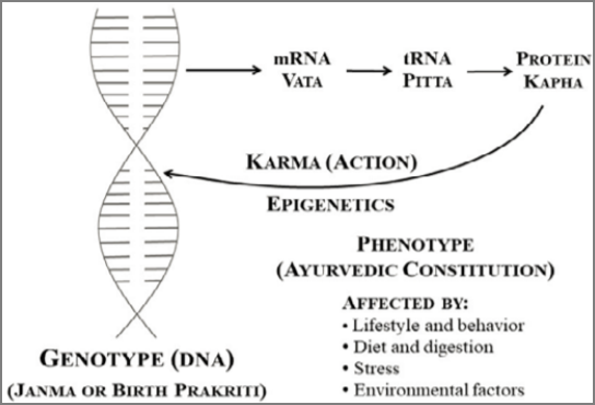 DNA and cellular function chart